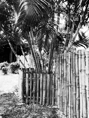 Photograph - Bamboo Fence by Isabelle Mbore