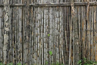 Bamboo Fence Art Print