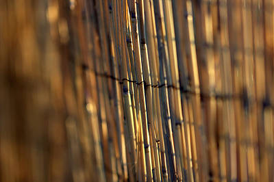Photograph - Bamboo Fence Selective Focus by Joseph Skompski