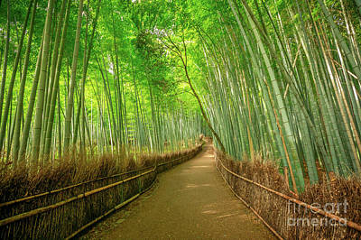Photograph - Bamboo Forest Arashiyama Background by Benny Marty