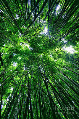 Photograph - Bamboo Forest by Eddie Yerkish