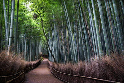 Bamboo Forest Entrance Art Print