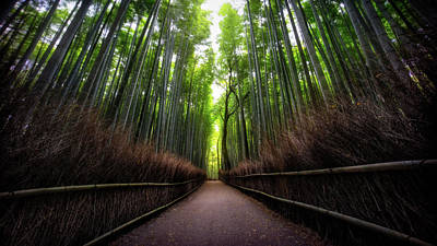Bamboo Forest Art Print by Heath Smith