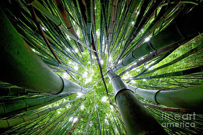 Bamboo Forest Maui  Print by Monica and Michael Sweet