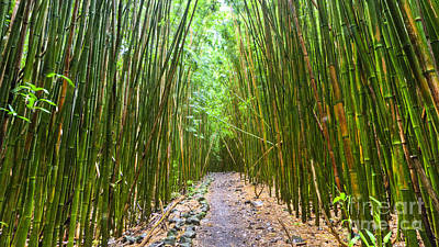 Bamboo Photograph - Bamboo Forest Trail Hana Maui 2 by Dustin K Ryan