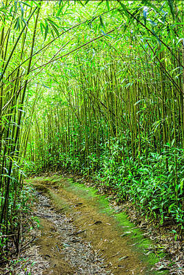 Bamboo Forest Trail Art Print by Kelley King