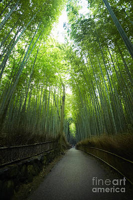 Photograph - Bamboo Forrest by Ben Johnson