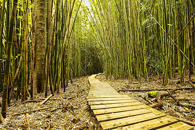 Photograph - Bamboo Forrest by Josh Bryant