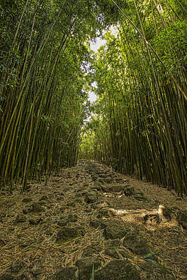 Photograph - Bamboo Forrest Vertical by Josh Bryant