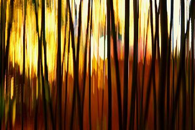 Photograph - Bamboo Garden Abstract by Patricia Strand