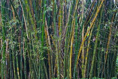 Bamboo Garden Original