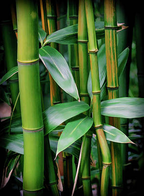 Photograph - Bamboo Green by Athena Mckinzie