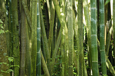 Photograph - Bamboo Grove by Christi Kraft