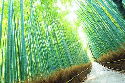 Bamboo Grove Forest Light Rays Trees Tilted Art Print