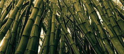 Bamboo Wall Photograph - Bamboo by Hudson Marsh
