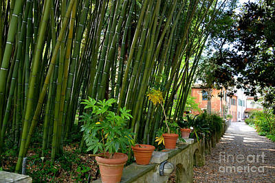 Photograph - Bamboo In Botanical Garden Of Pisa Italy by Tanya Searcy