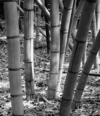 Photograph - Bamboo In The Shade by Robin Lewis