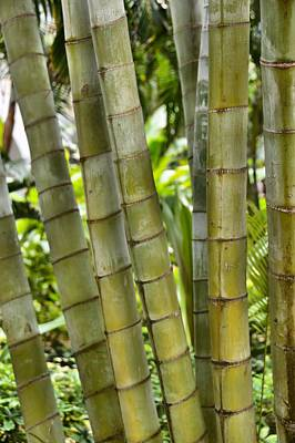Photograph - Bamboo by JAMART Photography