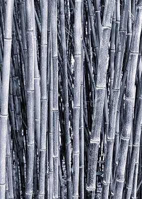 Bamboo Art Print by Keith Bowden