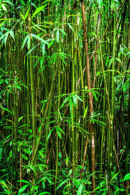 Bamboo Art Print by Kelley King