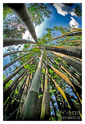 Photograph - Bamboo by Larry Mulvehill