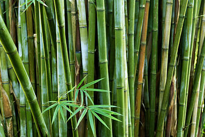 Bamboo  Print by Les Cunliffe