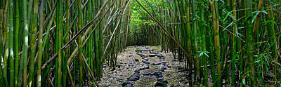 Going Green Photograph - Bamboo Mana by Sean Davey