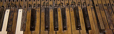 Bamboo Photograph - Bamboo Organ Keys by Betsy Knapp