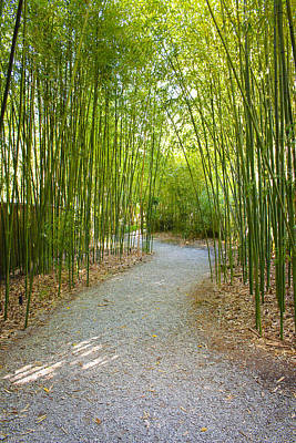 Bamboo Path 1 Art Print