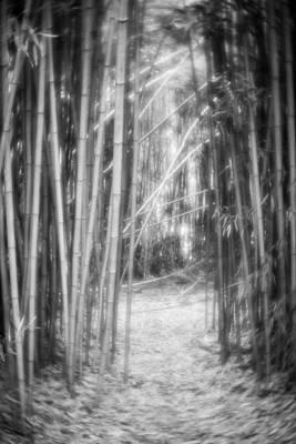 Photograph - Bamboo Path-bw by Joye Ardyn Durham