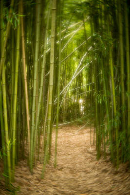 Photograph - Bamboo Path by Joye Ardyn Durham