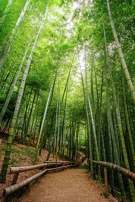 Photograph - Bamboo Path by Roy Cruz