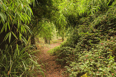 Photograph - Bamboo Path by Spikey Mouse Photography