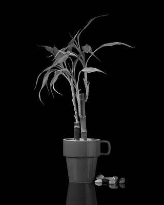 B Photograph - Bamboo Plant by Tom Mc Nemar