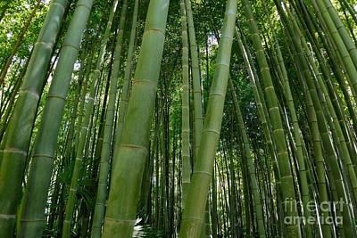 Bamboo Plantation Art Print by Sami Sarkis