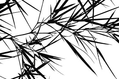 Ink Drawing Photograph - Bamboo  Poems 1 by Jenny Rainbow