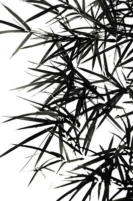 Ink Drawing Photograph - Bamboo  Poems 2 by Jenny Rainbow