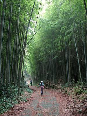 Photograph - Bamboo Road by Yali Shi