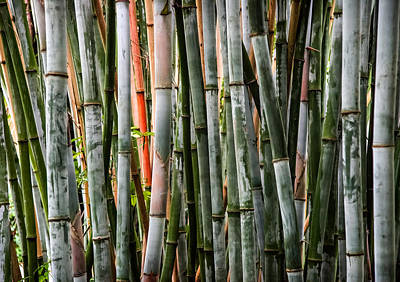 Bamboo Seduction Print by Karen Wiles