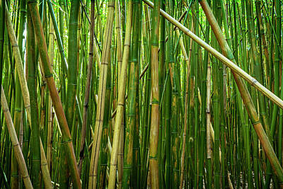 Bamboo Sticks Art Print by Kelley King