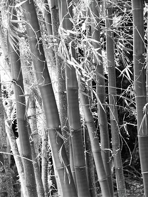 Photograph - Bamboo Strand by Florene Welebny