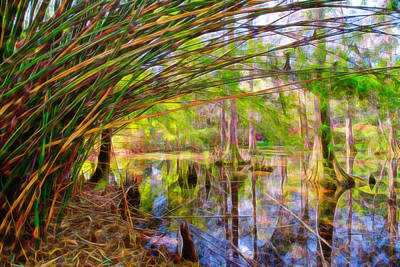 Photograph - Bamboo Swamp by Crystal Wightman