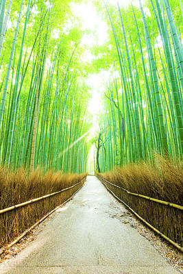 Bamboo Tree Forest Morning God Ray Straight Road V Art Print