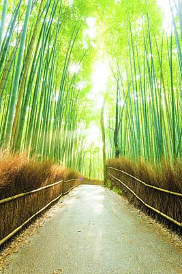 Bamboo Tree Forest Sun Light Beams Empty Road Art Print