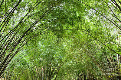 Photograph - Bamboo Trees In Wangjianglou Park In Chengdu China by Julia Hiebaum