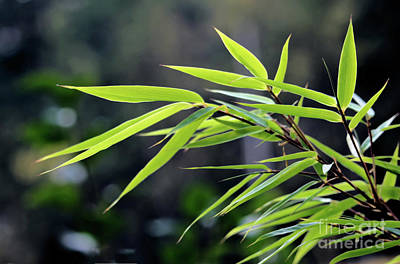 Photograph - Bamboo by Victor K