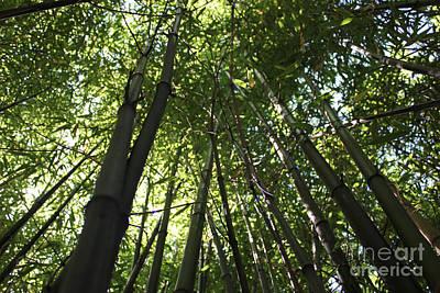 Photograph - Bamboo by Wilko Van de Kamp