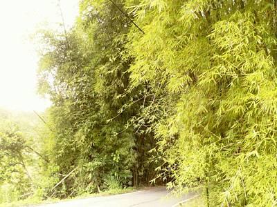 Photograph - bambu en Limani, Adjuntas by Walter Rivera Santos