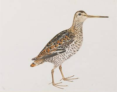 Selby Painting - Bamburgh Solitary Snipe by John Selby
