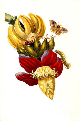 Painting - Banana And Butterfly  by Reproduction